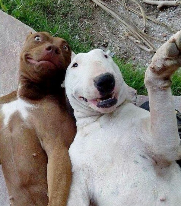 Animal-Selfies-2998175.png