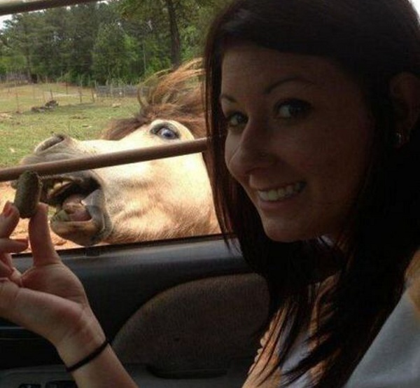 animal_photobombs_08