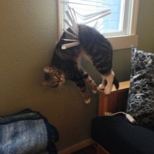 funny_cats_dogs_stuck_furniture_08