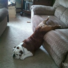 funny_cats_dogs_stuck_furniture_10