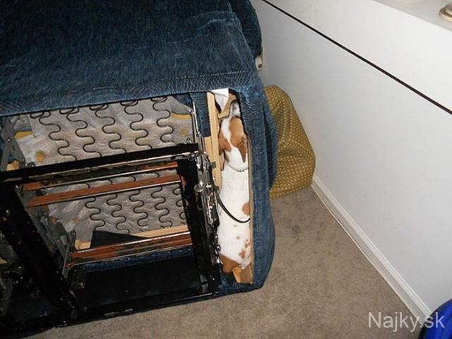 funny_cats_dogs_stuck_furniture_28