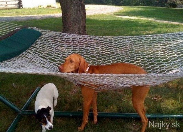 funny_cats_dogs_stuck_furniture_30