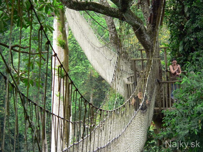 Canopy-Walk-Bridge
