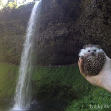 biddy-the-hedgehog-world-traveler-instagram-10_zps0f893ee5