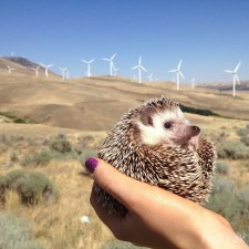 biddy-the-hedgehog-world-traveler-instagram-11_zps3320a65c