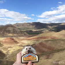 biddy-the-hedgehog-world-traveler-instagram-12_zps51e04bdf