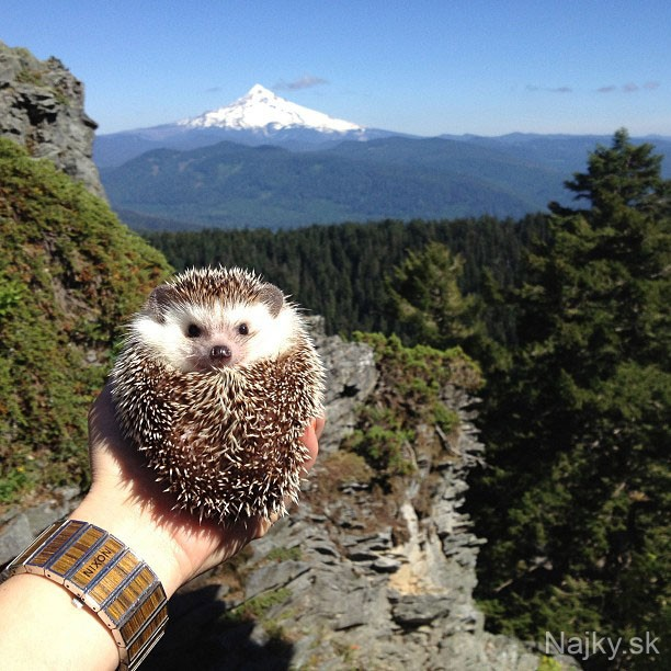 biddy-the-hedgehog-world-traveler-instagram-15_zps088dec3c