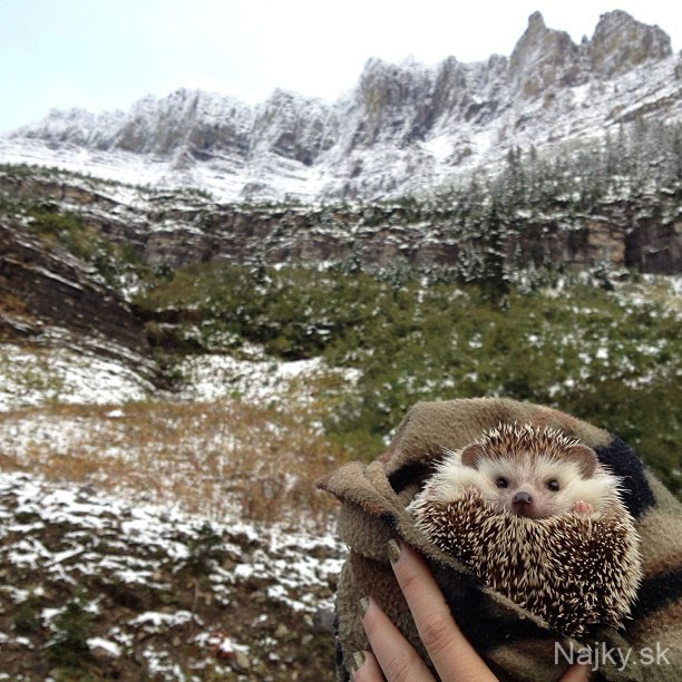 biddy-the-hedgehog-world-traveler-instagram-5_zps5a158263