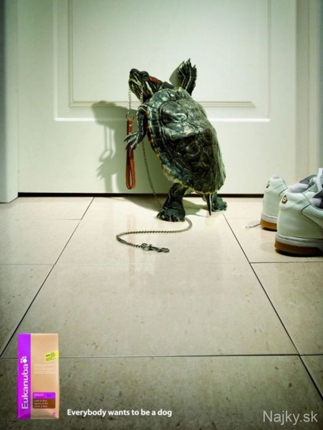 funny_ads_with_animals_36