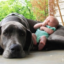 Dogs-and-Kids-3