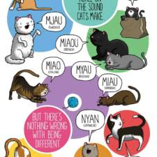 different-languages-expressions-illustrations-james-chapman-20