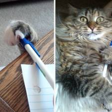 cat-thief-funny-animal-pictures-1__605