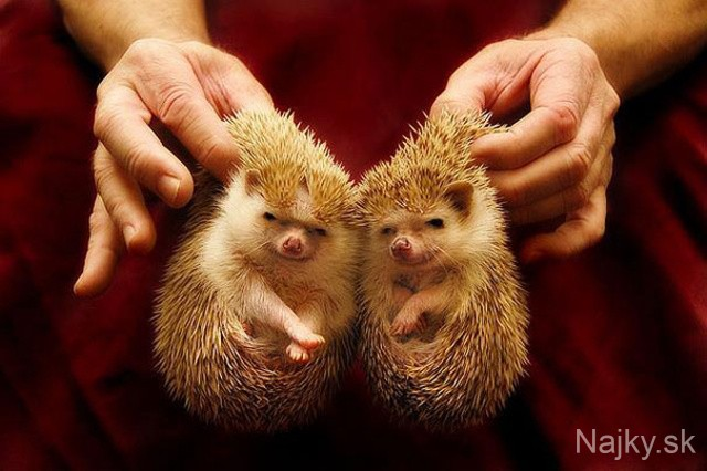 cute-animals-twins-16 - kópia