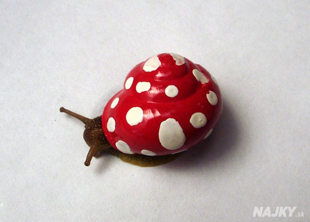 painted-snail-shell-23