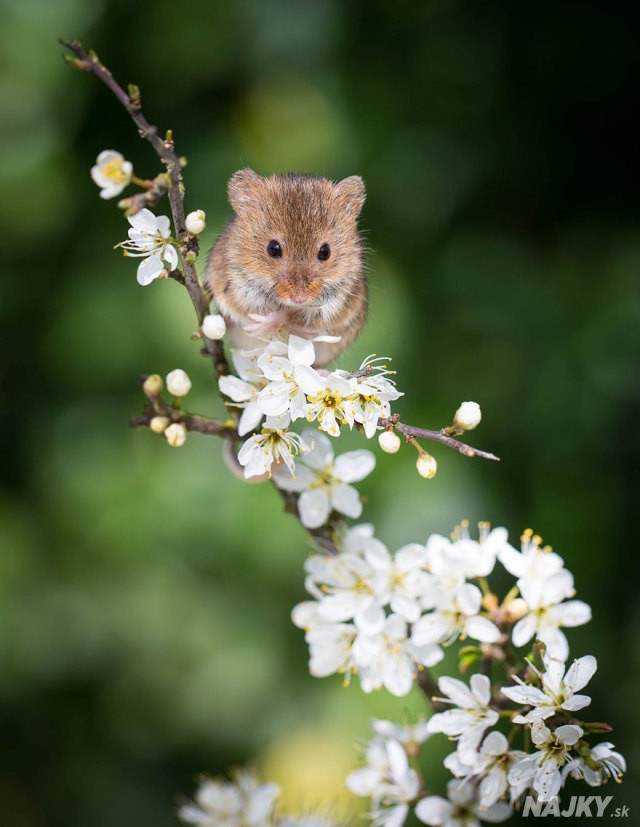 wild-mouse-photography-27