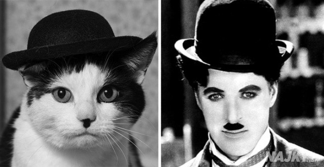 cat-looks-like-other-thing-lookalikes-celebrities-23__700