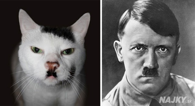 cat-looks-like-other-thing-lookalikes-celebrities-38__700