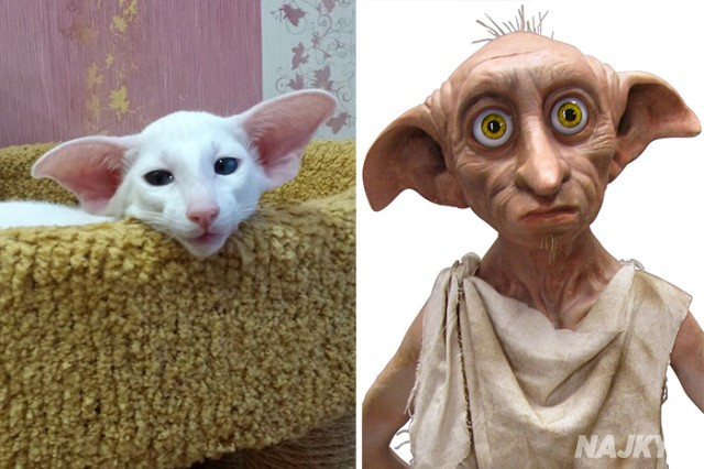 cat-looks-like-other-thing-lookalikes-celebrities-39__700
