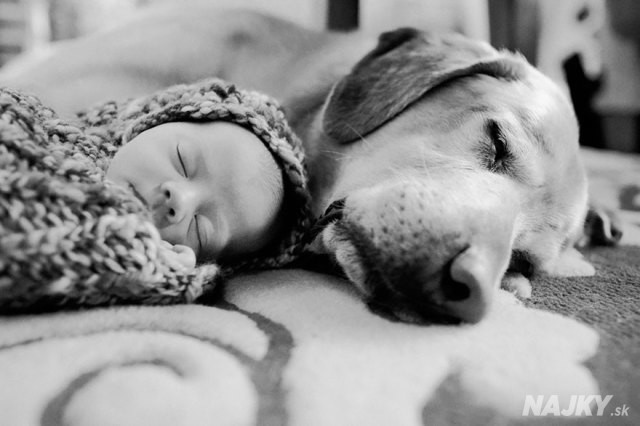 small-babies-children-big-dogs-11__880 - kópia