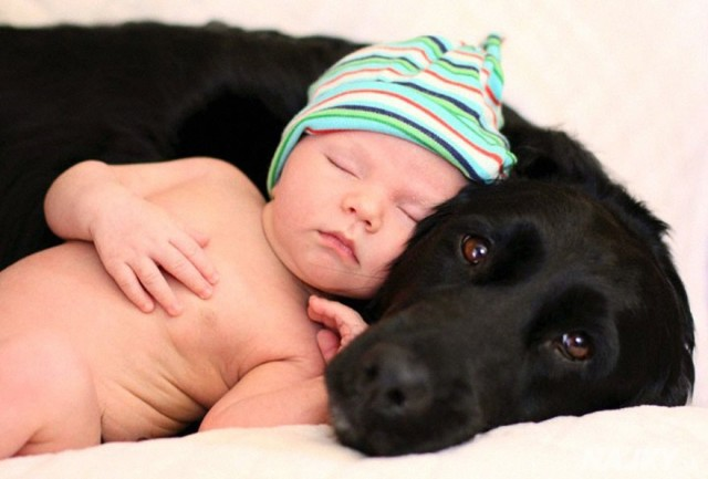 small-babies-children-big-dogs-301__880 - kópia