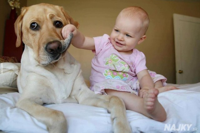 small-babies-children-big-dogs-34__880 - kópia