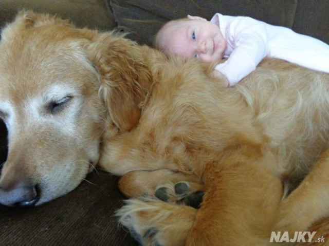 small-babies-children-big-dogs-62__880 - kópia