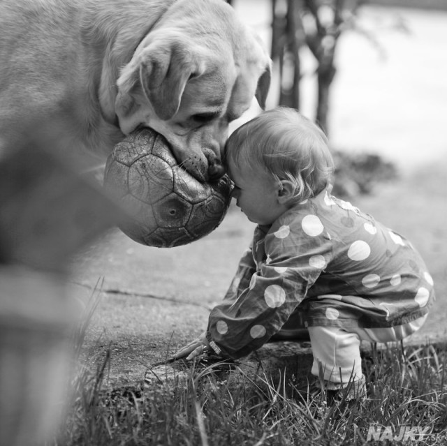 small-babies-children-big-dogs-64__880 - kópia