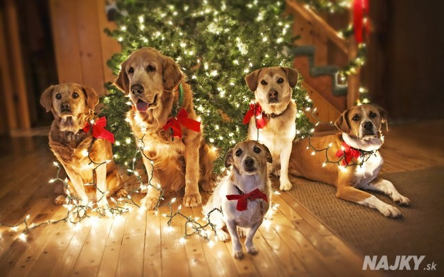 Christmas-Dogs-With-Lights-Wallpapers.27047773