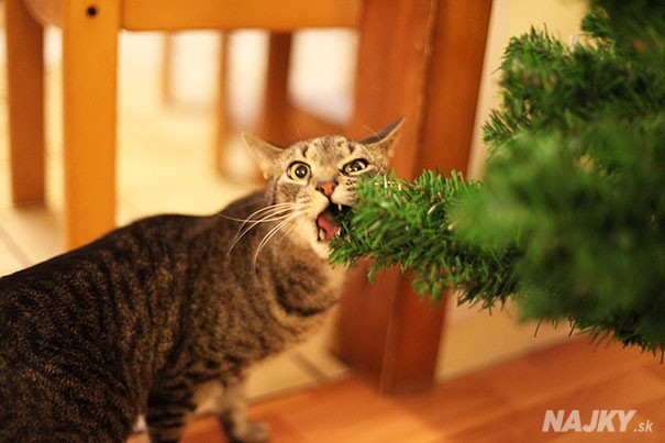 XX-animals-destroying-Christmas-14__605