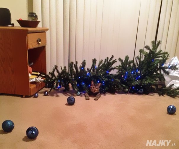XX-animals-destroying-Christmas-2__605