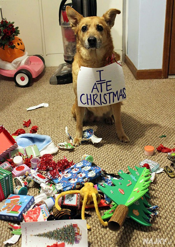 XX-animals-destroying-Christmas-3__605