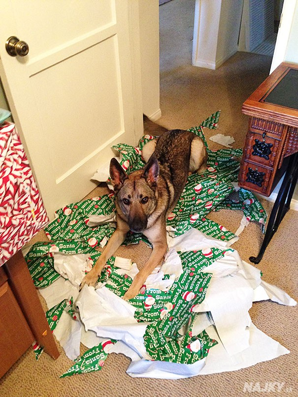 XX-animals-destroying-Christmas-5__605
