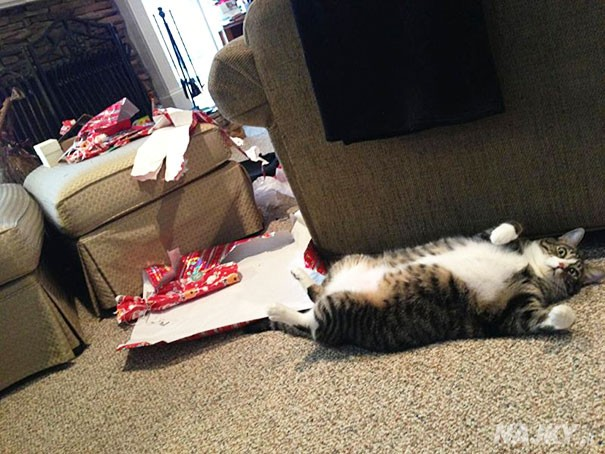 XX-animals-destroying-Christmas-6__605