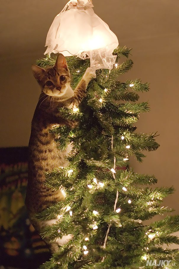 XX-animals-destroying-Christmas-8__605