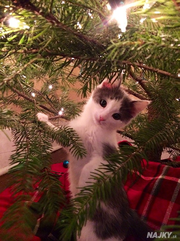 animals-destroying-christmas-can-on-christmas-tree__605