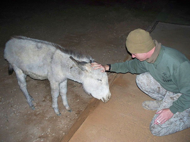 http://www.reddit.com/r/aww/comments/1pm8ja/when_i_was_in_iraq_we_had_a_pet_donkey_reddit/
