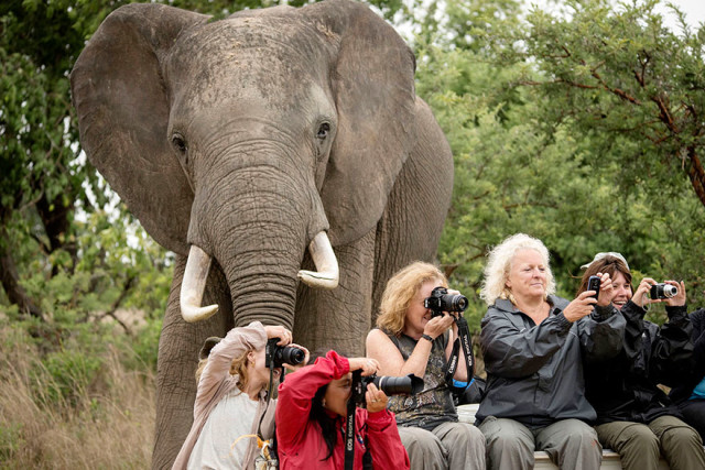 http://voices.nationalgeographic.com/2014/01/28/elephant-photobombs-tourists-howd-it-happen/