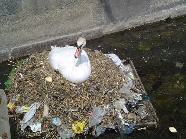 http://en.wikipedia.org/wiki/Marine_pollution#/media/File:Pollution_swan.jpg