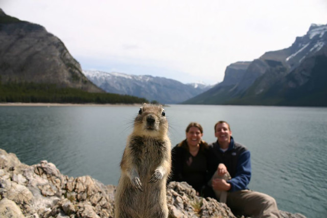 http://photography.nationalgeographic.com/photography/enlarge/squirrel-portrait-banff.html