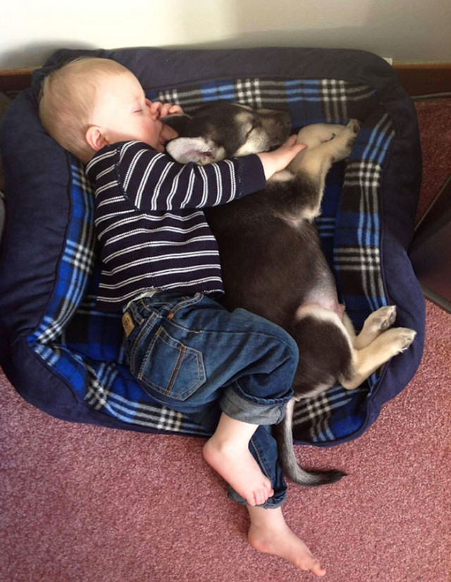 http://static.boredpanda.com/blog/wp-content/uploads/2015/04/kids-with-dogs-52__700.jpg