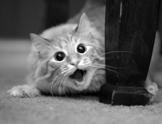 http://www.mybs.com/6139-13-adorably-surprised-cats/#PrettyPhoto6139/11/