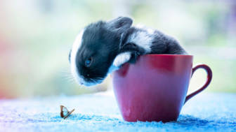I-Photographed-and-documented-my-baby-bunnies-growing-up13__880