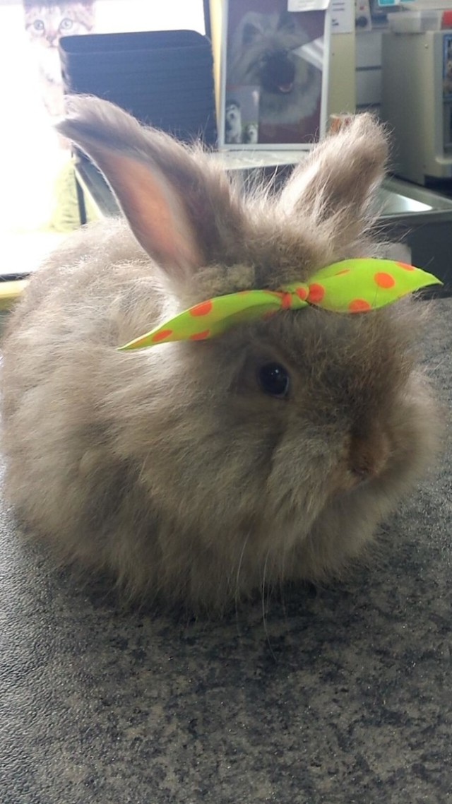 http://www.reddit.com/r/aww/comments/2swve5/today_at_work_i_put_a_bow_in_this_bunnys_hair/