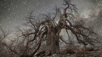 ancient-oldest-trees-starlight-photography-beth-moon-11