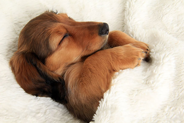 http://www.boredpanda.com/sleeping-dogs-human-bed/