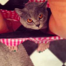 23-Cats-that-Love-Underwear-in-the-Bathroom-__700
