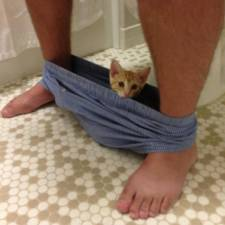 23-Funny-Cats-that-Love-Underwear-in-the-Bathroom-11__700