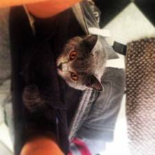 23-Funny-Cats-that-Love-Underwear-in-the-Bathroom-3__700