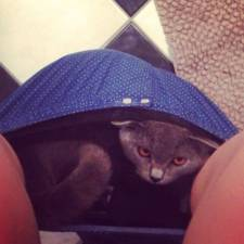 23-Funny-Cats-that-Love-Underwear-in-the-Bathroom-4__700