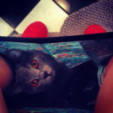23-Funny-Cats-that-Love-Underwear-in-the-Bathroom-7__700